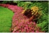 Tom Flynn & Sons Landscape, Inc. - Favorite Landscaping Company in Paso Robles