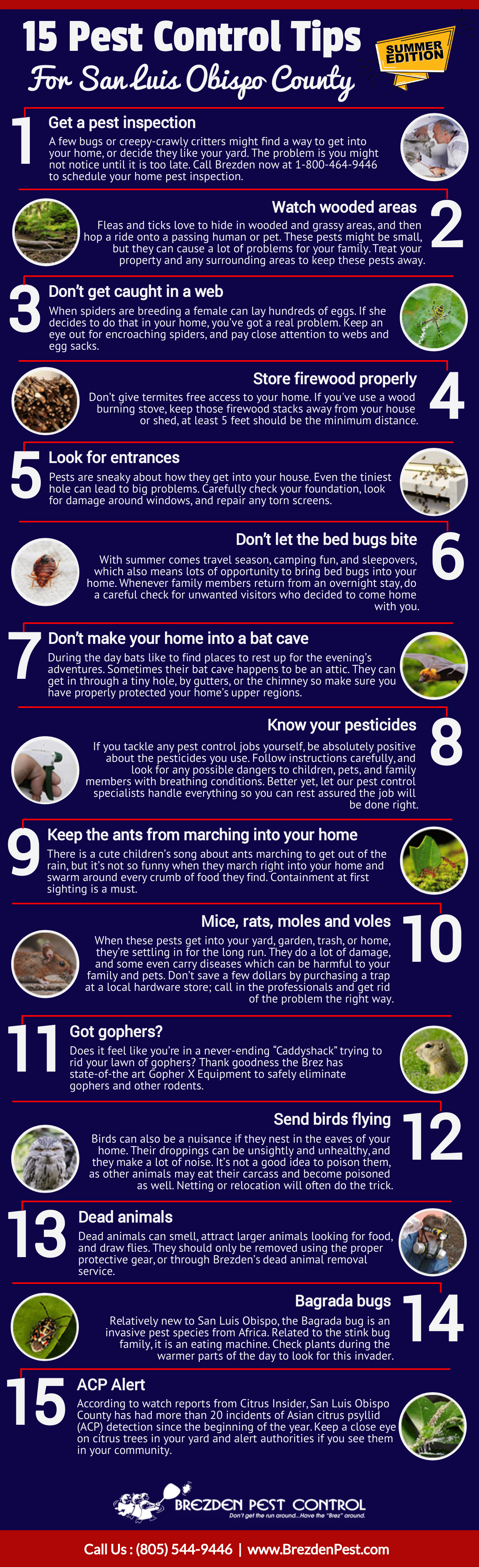 15 Pest Control Tips For San Luis Obispo County: Summer Season