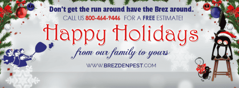 Local Pest Control Tips & How To Handle Holiday Pests