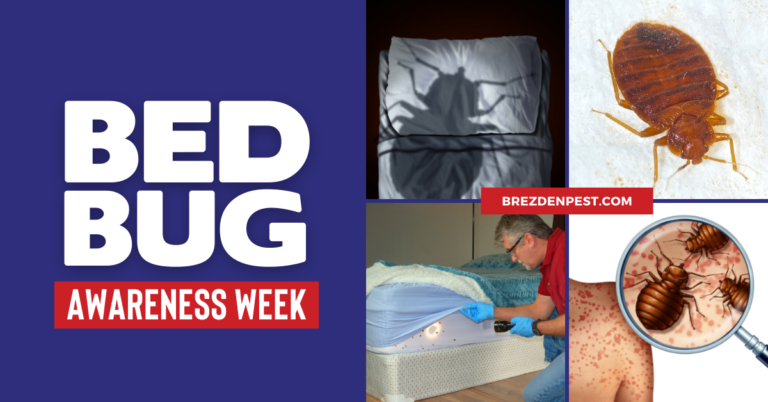 Bed Bug Bites: How To Get Rid Of Bed Bugs [INFOGRAPHIC]