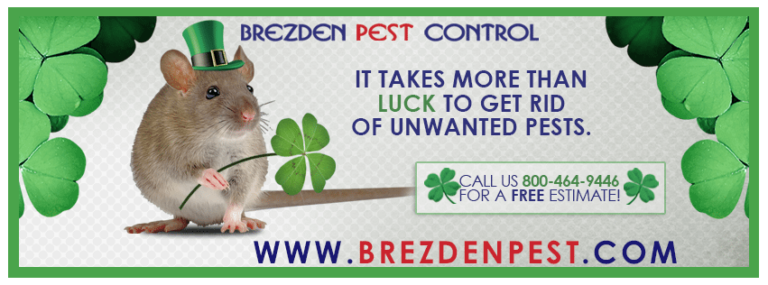 Get Rid Of Pests Like St. Patrick Got Rid Of The Snakes