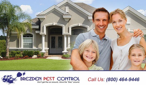 Benefits Of TAP Pest Control Insulation
