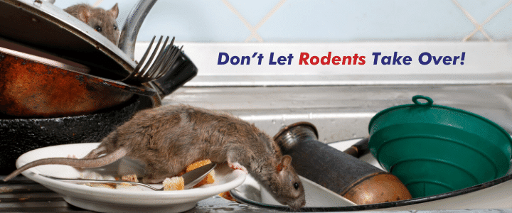 Coronavirus Closures Forcing Rats Into People's Homes