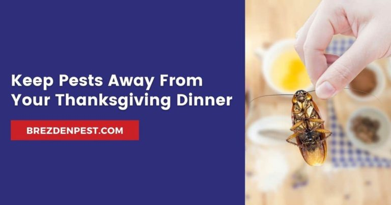 Keep Pests Away From Your Thanksgiving Dinner