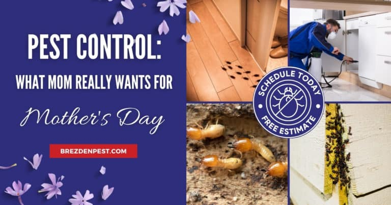 PEST CONTROL: What Mom Really Wants For Mother's Day