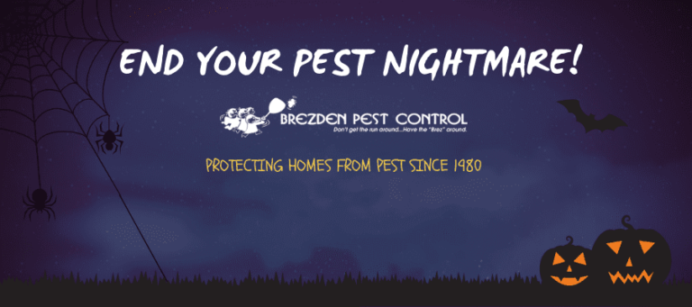Use Talstar Pro As A Solution For Hard To Kill Insects