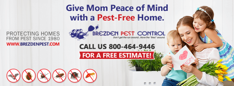 Start The Summer Right With A Pest Control Inspection
