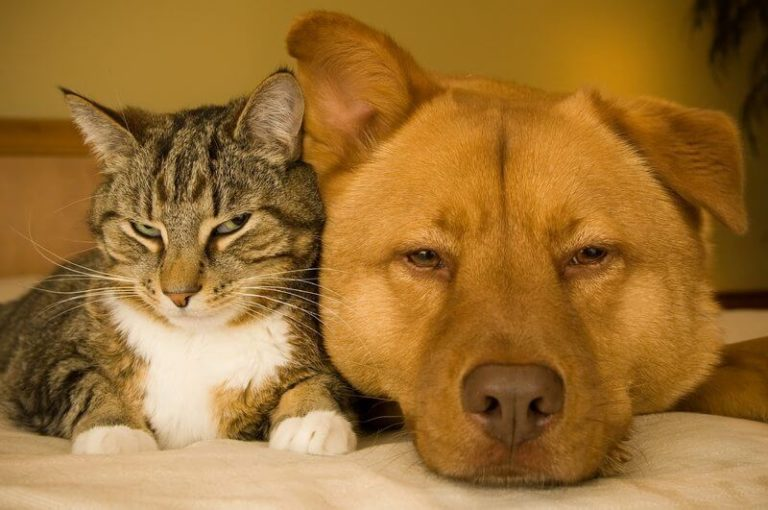 Top 10 Pest Control Mistakes To Avoid For Pet Owners