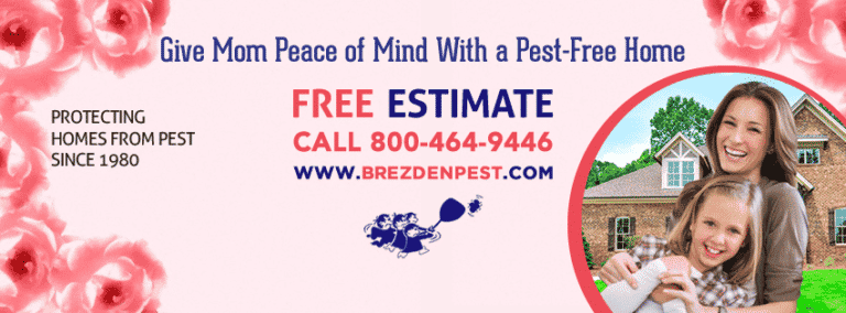 Brezden Pest Control Provides Earwig Control Insights For Mother's Day