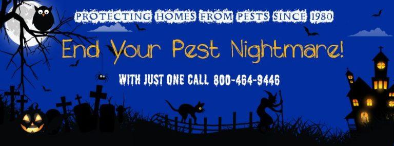 Don't Go Batty This Halloween, Call Brezden Pest Control