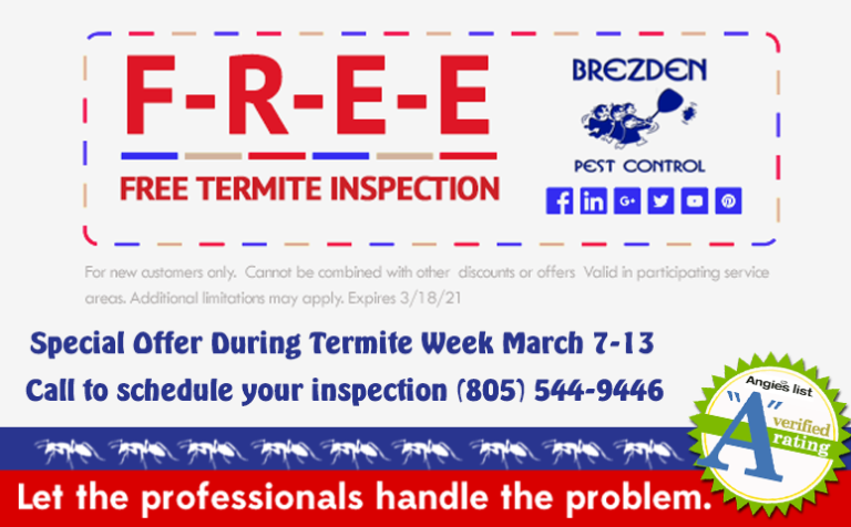 How To Prevent A Termite Infestation