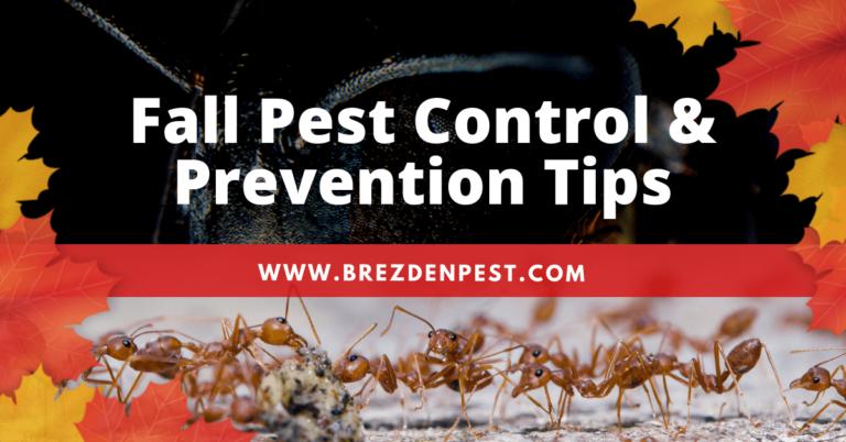 Brezden Pest Control's Top September Pest Control Tips