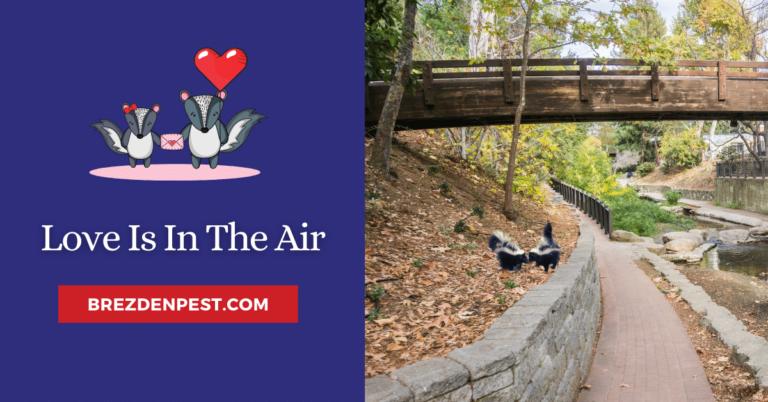 Why Do Skunks Like Valentine's Day?