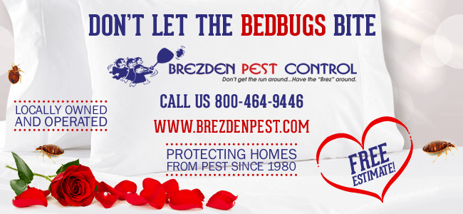 Bed Bug Eradication In San Luis Obispo