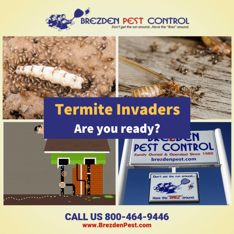$100 Off SLO Termite Treatments During Termite Week