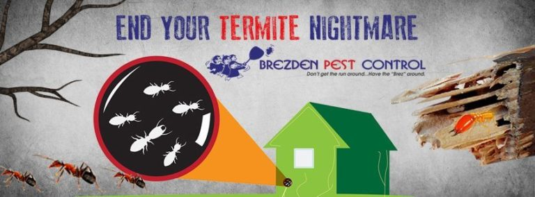 Are Termites Haunting Your Home?